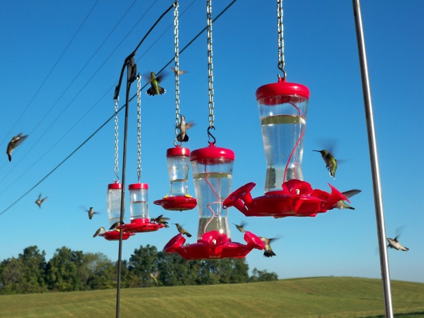 Hummingbirds 002[1] (2)