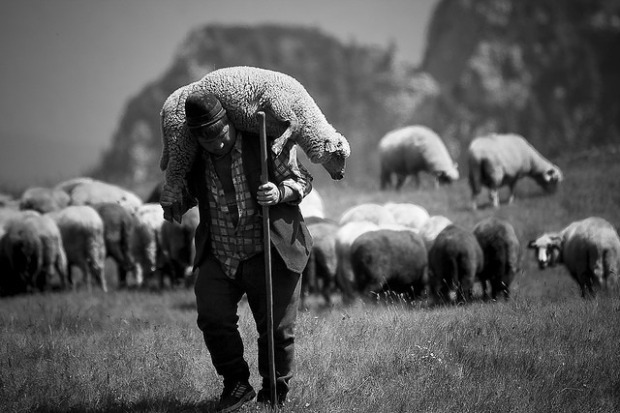 shepherd-carrying-sheep1