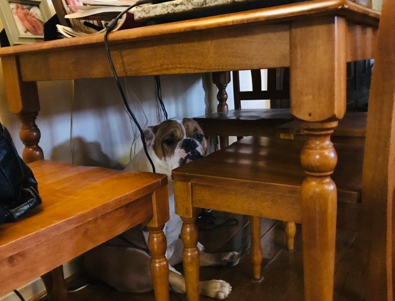 Teddy under table